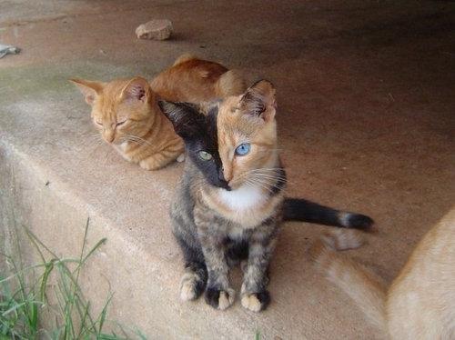 二つの顔を持つ猫01