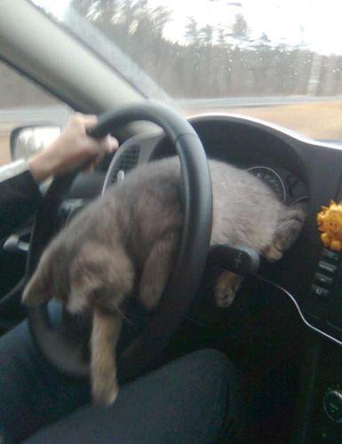 ロシアの危険な運転04
