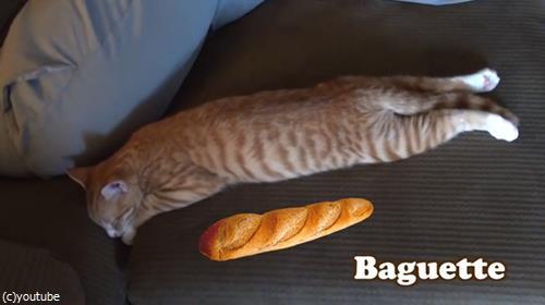 猫をパンにたとえると02