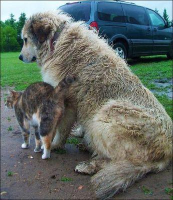 愛情いっぱいの動物11