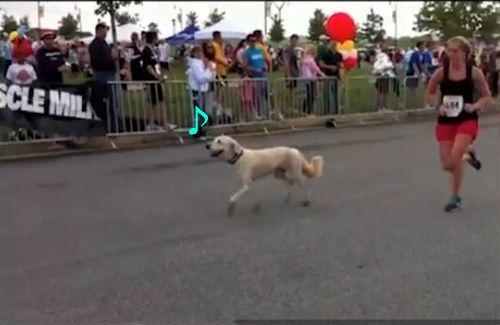 ハーフマラソン犬00