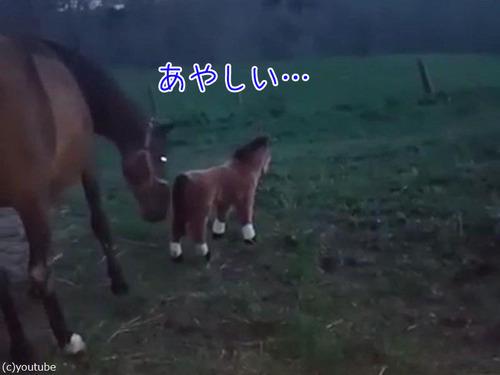 馬とぬいぐるみの馬00