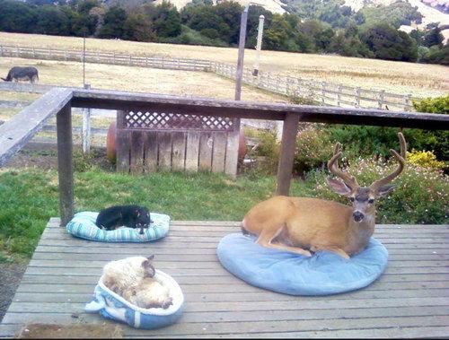 休憩中でリラックス中の動物たち13