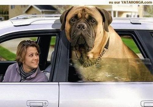 大きな犬のトラブル04