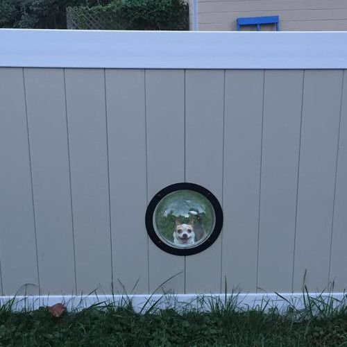 犬のためにフェンスに小窓04