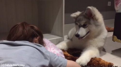 一緒に泣く犬03