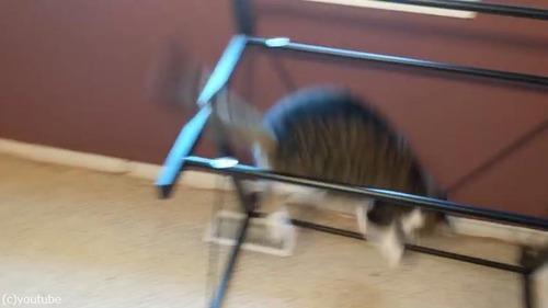 お気に入りの机の天板を外されて困惑する猫03