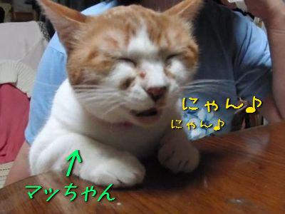 いじらしい猫