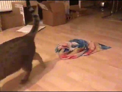 不思議な猫の行動04
