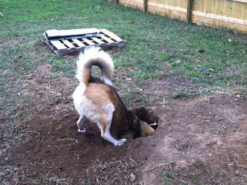 穴の中の犬01