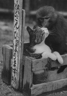 猿と猫の仲06