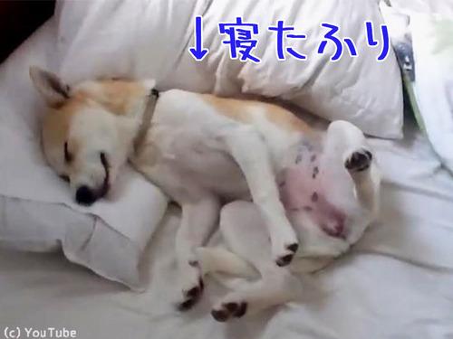 病院に行くのを頑なに拒否する犬00