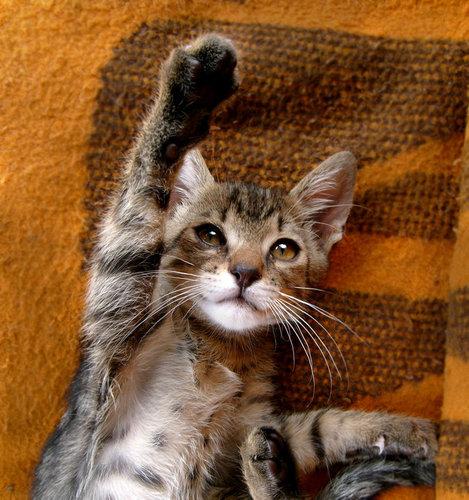 猫のハイタッチ03