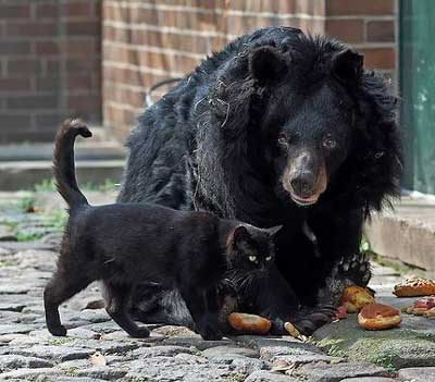 熊と猫01