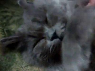 凄い寝顔の猫