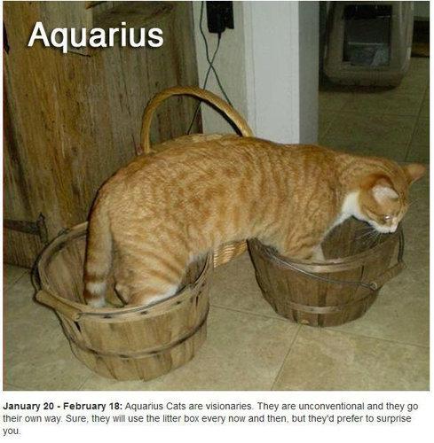 猫で12星座占い11