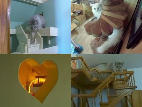 猫のために15年かけて家を大改造00