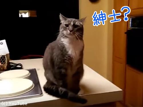 目が合うたびにおじぎする猫00