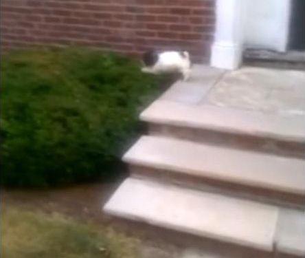 階段が怖い子犬…まさかの方法05