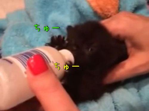 ミルクを飲む子猫のリアクション00