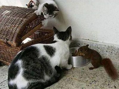リスと猫00