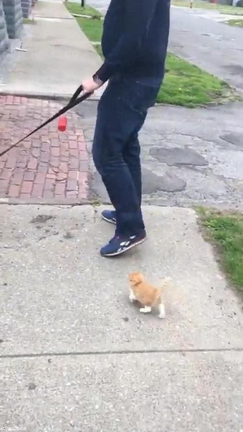 犬の散歩をしていたら迷子の子猫がついてきた03