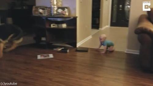 追いかけっこする赤ちゃんと犬04