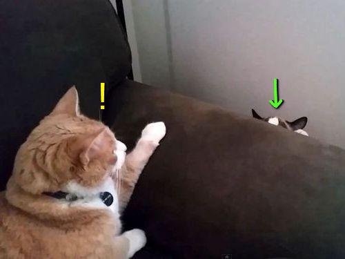 猫と猫がソファ越しに出会った00