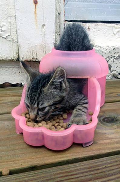 おかしな猫たち07