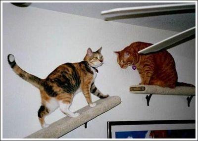 猫用の足場06