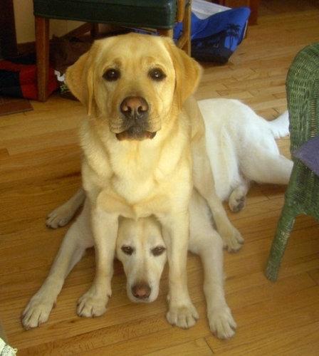 「おすわり」する場所を間違えた犬17
