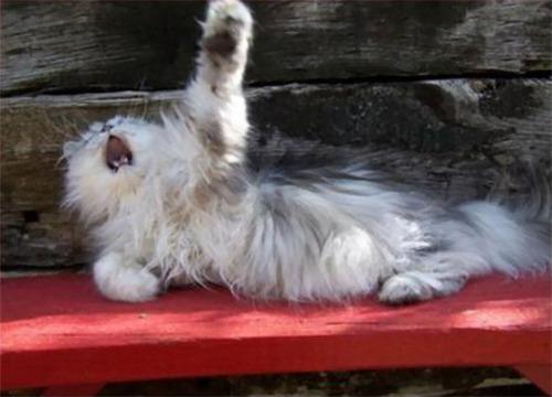 演技力の高い猫たち10