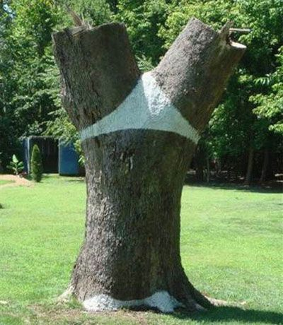 世界の奇妙な木20