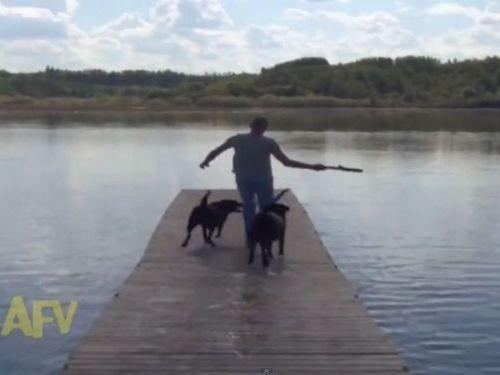 湖と犬01