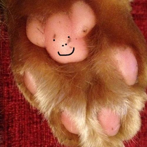 猫の肉球にテディベア06