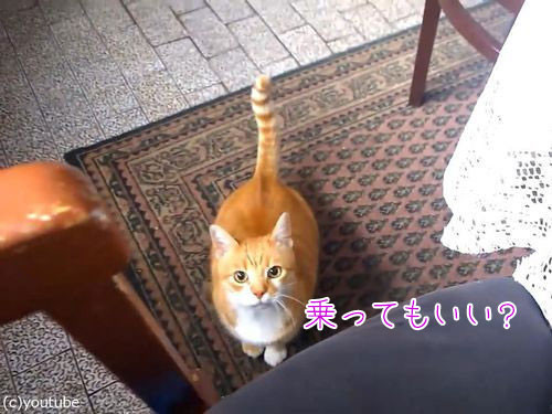 甘えてくる猫00
