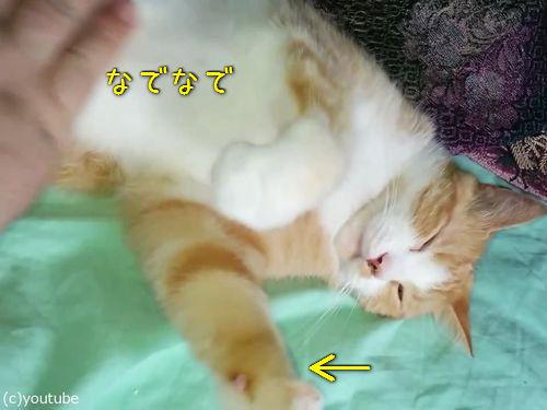 眠る猫のお腹をナデナデしたら足がピーン00