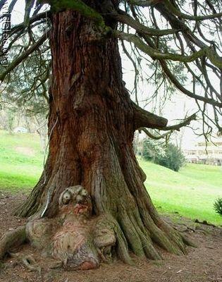 凄い木19