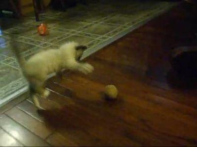 ジャガイモと子猫