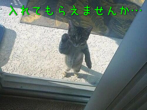 動物「おうちに入れてー!」00