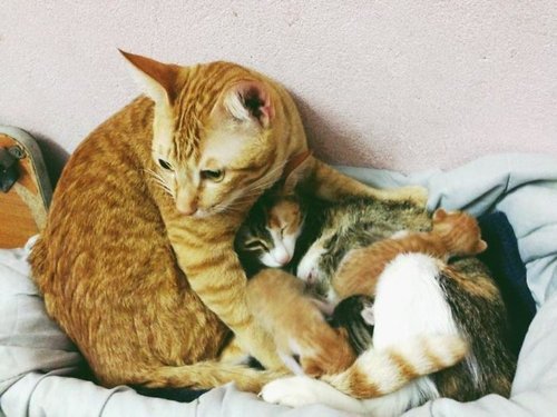 家族愛の強いパパ猫09
