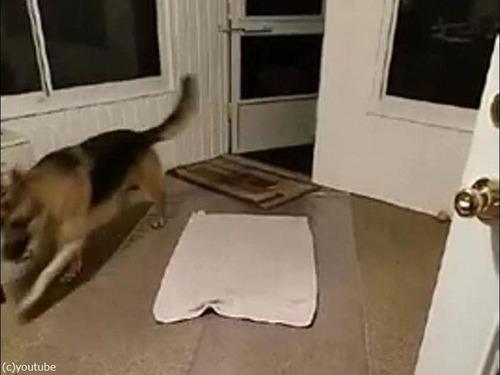 犬と敷物02