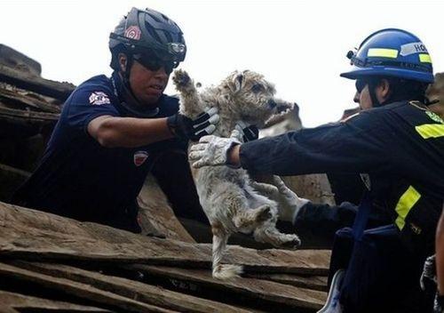 助けられた動物たち07