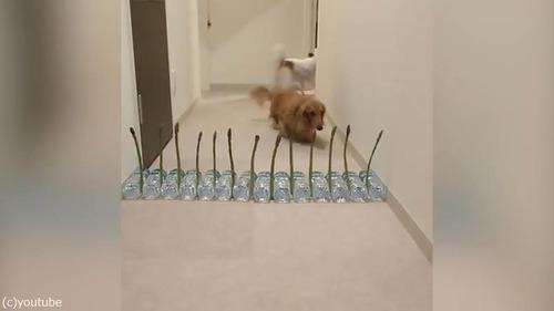 アスパラガスVS犬03