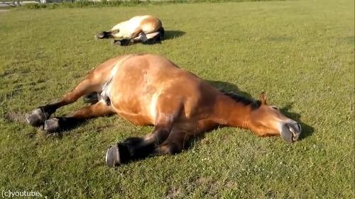 いびきの大きな馬01