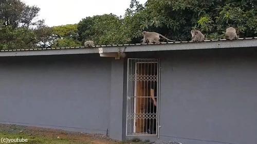 ケガした猿が家族の元へ03