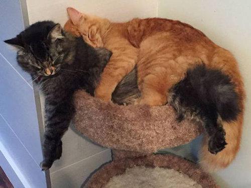 ベッドをシェアしていた子猫2匹07