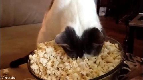 作りたてのポップコーンと猫06