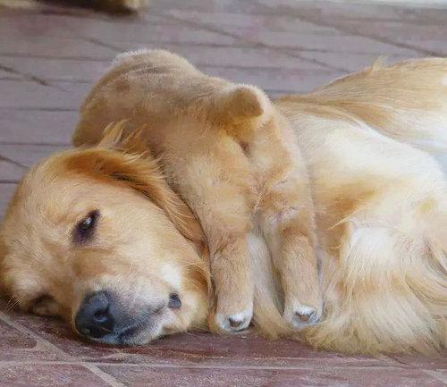 ママ猫&犬が子育てに奮闘してるときの顔05