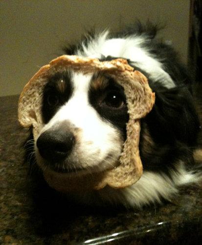 犬とパンの耳01